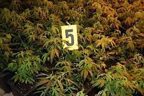 Rekreační chalupa skrývala špičkovou pěstírnu marihuany.