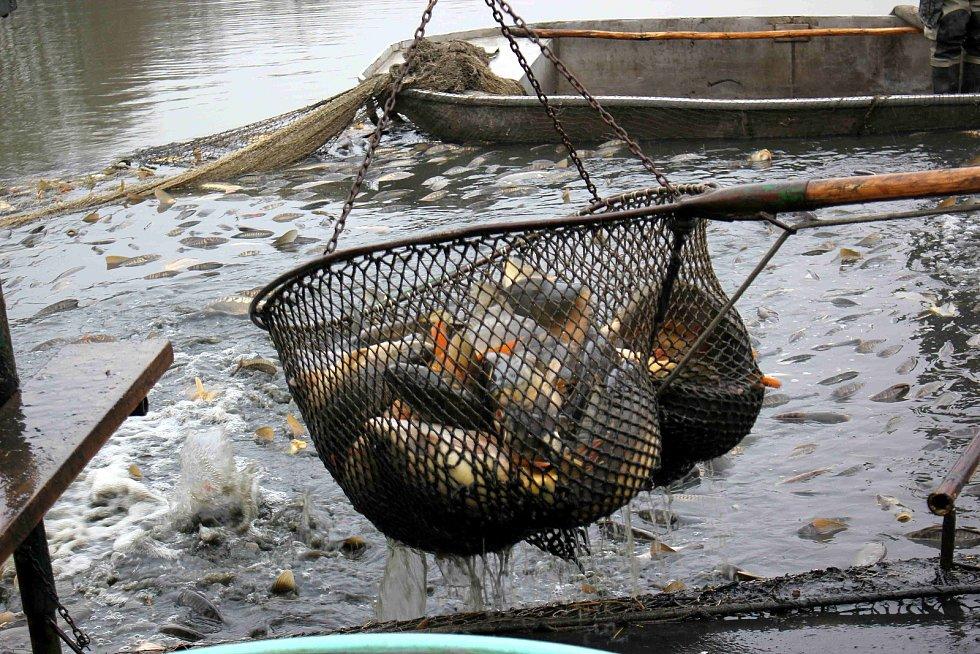 Svůj výlov má za sebou i rybník v Zálší u Chocně. Konal se v sobotu a pro veřejnost nechyběl prodej ryb či rybích dobrot.