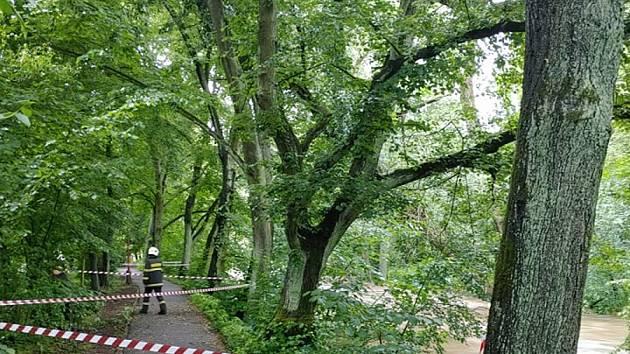 Strom nakloněný z řeky uzavřel cyklostezku.