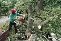 Následky bouřky v arboretu u Domova pod hradem Žampach.