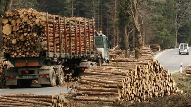 Stromy se uhlídat nedají. Každoročně se v lesích ztrácí dřevo, avšak uhlídat je nemožné. Navíc i průkaznost