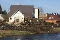 Poslední tři lipové stromy na nábřeží Divoké Orlice v Žamberku byly pokáceny.