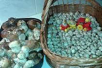 Za hodinu nasbíraný koš hub.