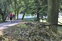 Ušetřeny řádění bouře nezůstaly ani stromy v Tyršových sadech