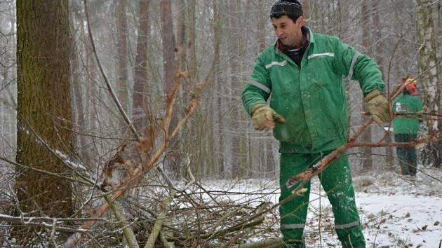 Větve ve Studáneckém lese ohrožovaly chodce