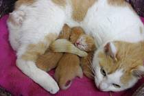 Kočičí novorozenci i s mámou.