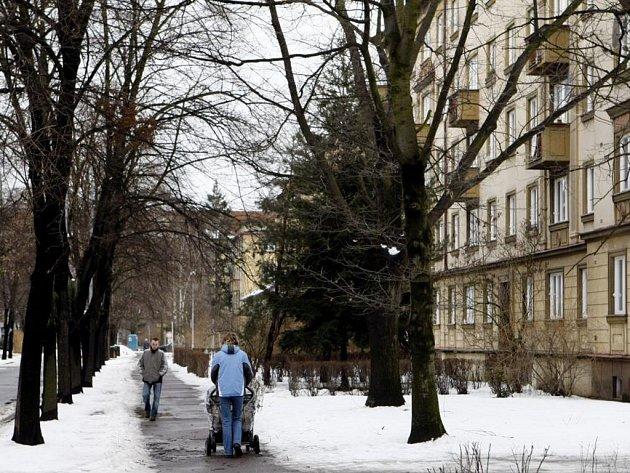 Lípy v Jilemnického ulici by měly ustoupit parkovištím pro auta