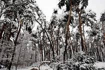 Lesopark na Dukle nápor těžkého sněhu doslova odnesl. Hovoří se o tom, že až padesát procent tamních stromů bylo zničeno.