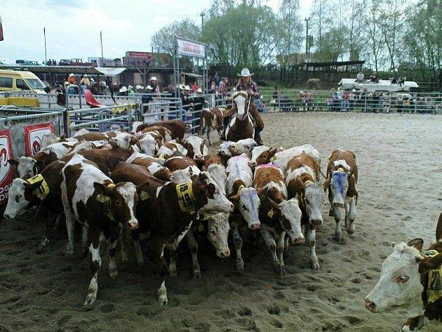 Závody Ranch Rodeo