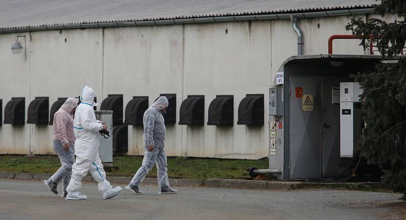 V Česku je druhé ohnisko ptačí chřipky. Nemoc se objevila v komerčním chovu Moras Moravany ve Slepoticích na Pardubicku.