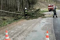 Spadlý strom u Borové na Svitavsku.