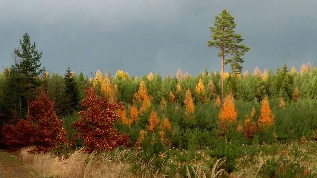 Podzimní příroda.