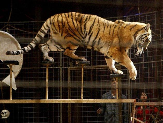 Cirkus JO–JOO, v těchto dnech hostuje v Pardubicích