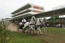 Na pardubickém závodišti se o v sobotu koná výstava Koně v akci.