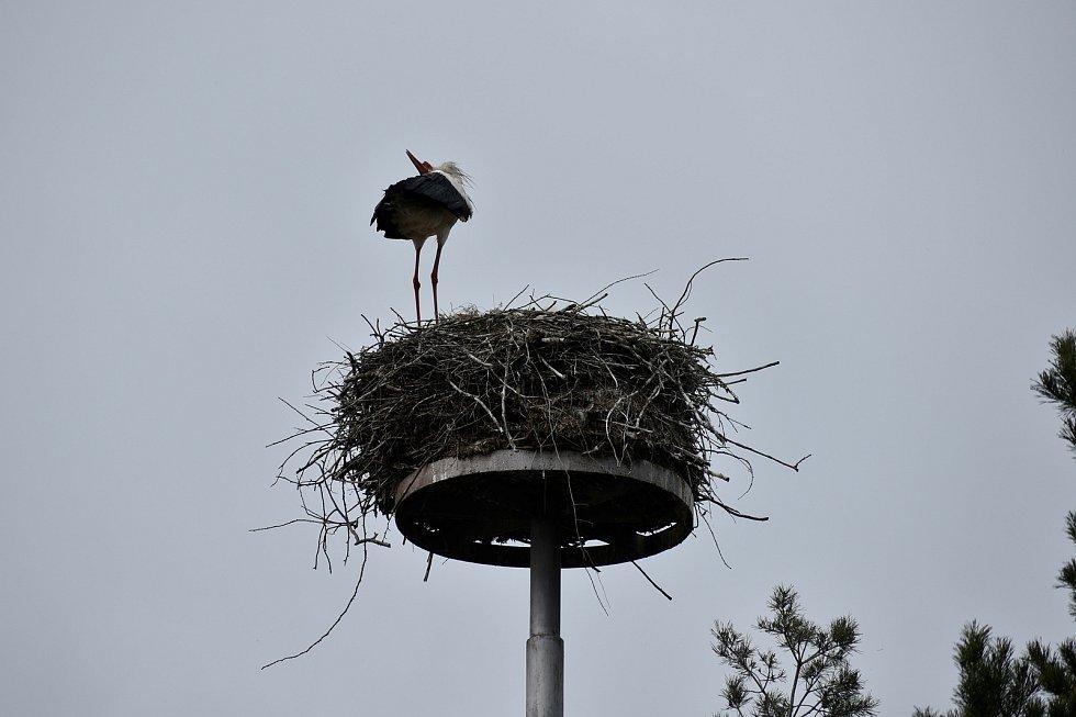 Čapí hnízdo v Dolních Ředicích.