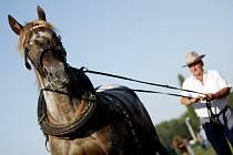 Koně v akci na pardubické dostihovém závodišti