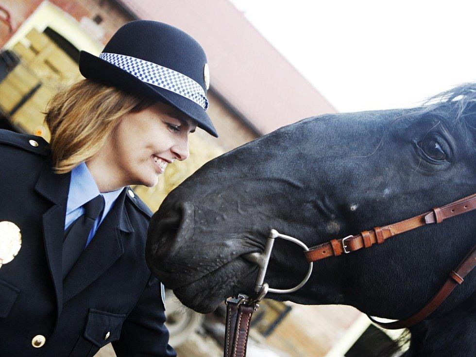 Pětiletý starokladrubský vraník Solo Battura XXII. – 17 ve středu opustil stáje Národního hřebčína Kladruby nad Labem v Heřmanově Městci a spolu se strážníky jízdního oddílu pardubické městské policie se vydal na cestu k výcviku pro policejního koně.
