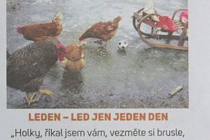 Ptačí chřipka na ústupu aneb Volný pohyb povolen!