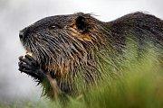 Nutriím se v Pardubicích výjimečně daří