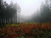 Věra Vaňková - Podzimní mlhy