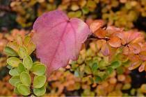 Barevná podzimní příroda láká k procházkám. Nechte se inspirovat našimi tipy na výlety.