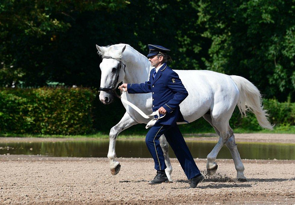 V úterý navštívili hřebčín v Kladrubech nad Labem zástupci královských stájí v Dánsku, aby si vybrali další starokladrubské koně pro ceremoniální službu.
