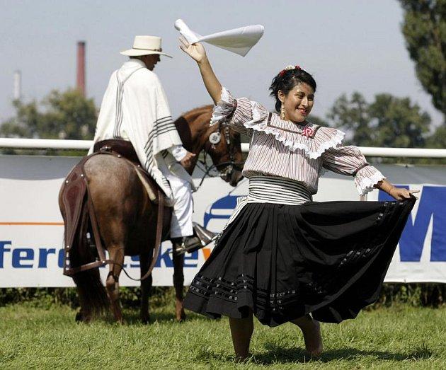 Třináctý ročník mezinárodní výstavy Koně v akci na pardubickém dostihovém závodišti.