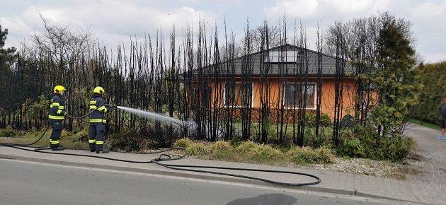Majitel spaloval starý bambus a neuvědomil si, že trošku fouká vítr. Plameny se tak rozšířily na řadu vysázených a krásně vzrostlých tújí.