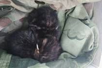 Muž zachránil koťátka. Ta to ale vůbec nepotřebovala. Foto: MP Pardubice