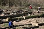 Kácení stromů za OBI marketem
