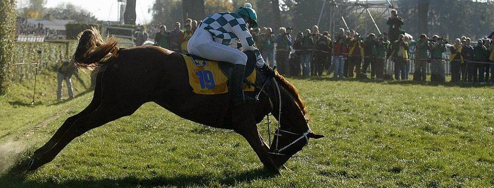 Kůň Ligreta s Lucií Baluchovou