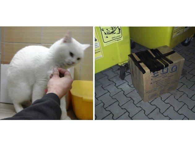 Krabice ukrývala bílou kočku.