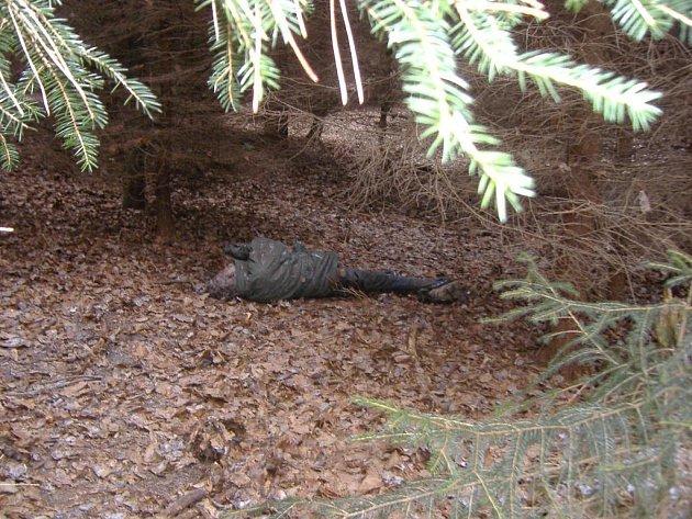 V lese u Velin byl nalezen mrtvý muž