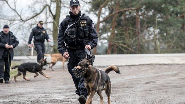 Policisté pátrali v lesích po nezvěstném muži