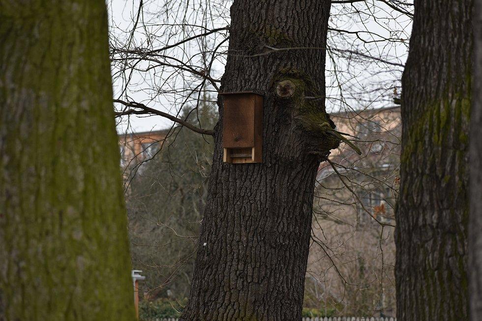 V Přelouči nechala radnice nainstalovat přes 90 ptačích budek, aby ptáci měli kde hnízdit. Všechny budky jsou obsazené.