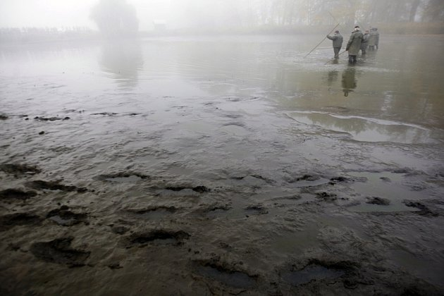 Výlov bohdanečského rybníka Broumar