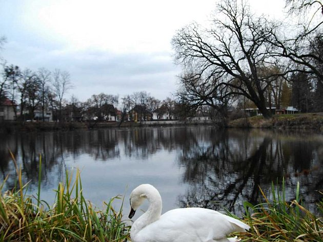 Matiční jezero v Pardubicích