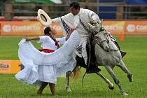 V Pardubicích se představí peruánské plemeno paso.