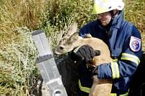 Záchrana srnčího mláděte ze studny