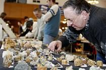 Pardubický kulturní dům Dukla se stal doslova rájem pro vyznavače minerálů, různých nerostů, hornin, ale také třeba vypreparovaných zvířat.