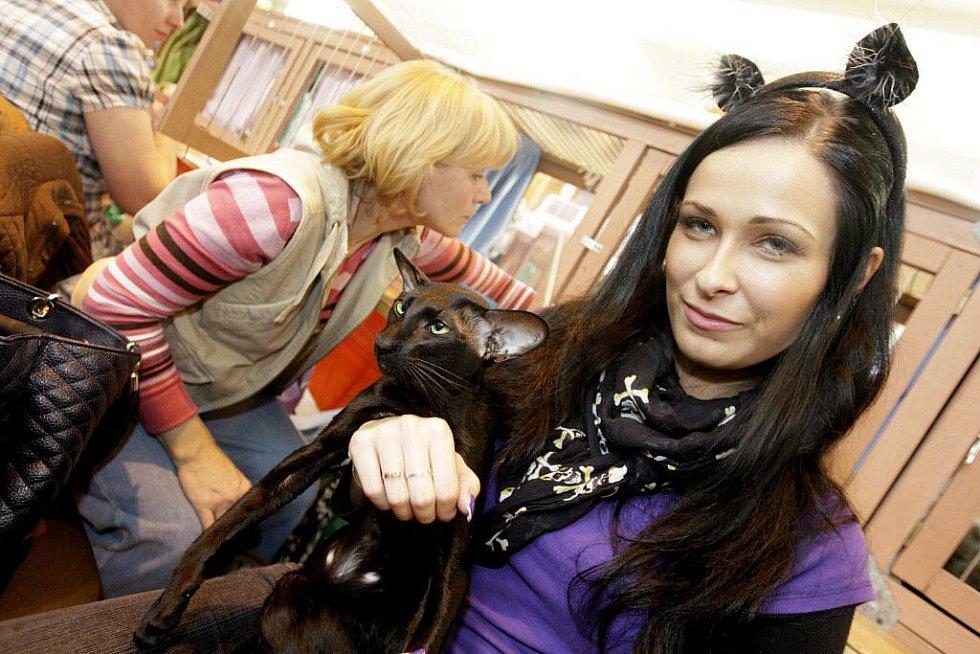 Mezinárodní výstava koček přilákala do Pardubic desítky vystavovatelů a především jejich čtyřnohých miláčků.