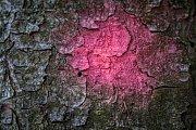 Maličká dírka, kterou se kůrovec do oslabeného stromu navrtal je první známkou napadení.