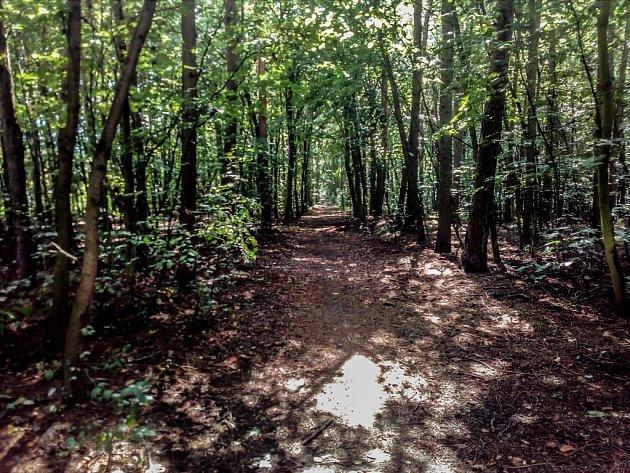 Jedna z pěšin vedoucí k sídlišti Nová Trnová. Právě v tomto lesíku se přepadení odehrálo.