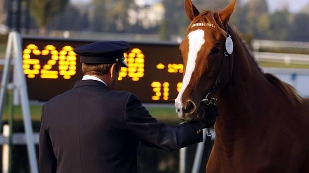 Dražba koní na závodišti