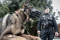 Policejní psovodi na kontrole chatové oblasti.