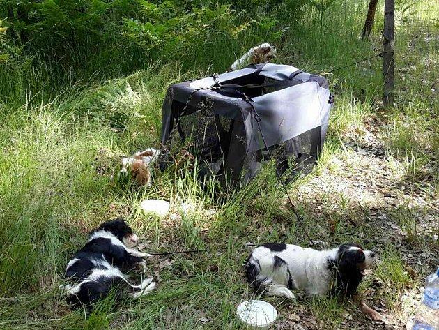 Při dopravní nehodě u Býště se hasiči museli postarat i o zraněné psy.