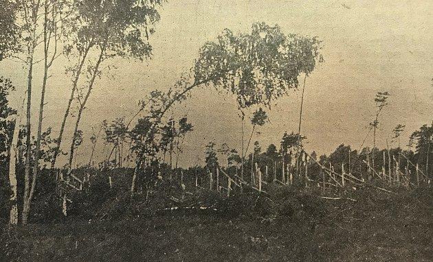 Fotografie pokácených stromů na Pardubicku vyšla vroce 1929vperiodiku Východočeský Republikán.