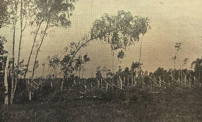 Fotografie pokácených stromů na Pardubicku vyšla v roce 1929 v periodiku Východočeský Republikán.