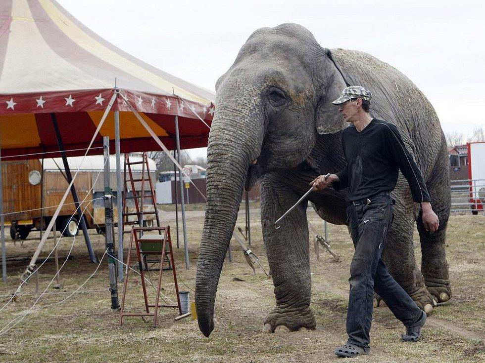 Jednou z největších celebrit, která zde nesmí chybět, je i 36letá slonice Noira.