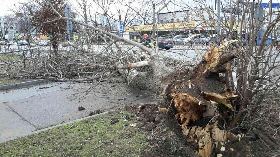 Silný vítr kácel stromy také v Chrudimi.